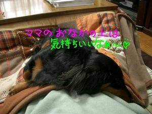 Cimg1498_1_3