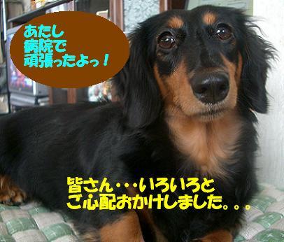 Cimg6736_tyoko