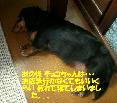 Cimg7140_g