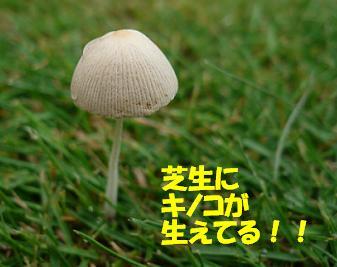 P1000421_2