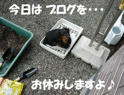 P1020625_cho1