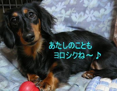 P1040090_choko