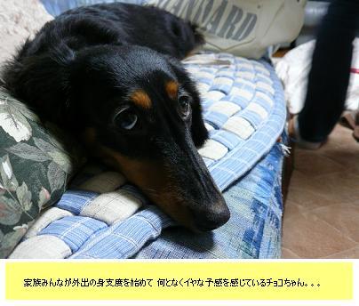 P1040136_cho3