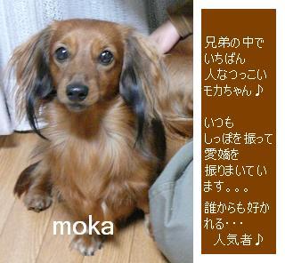 P1040029_moka