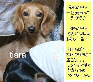 P1040029_tiara1