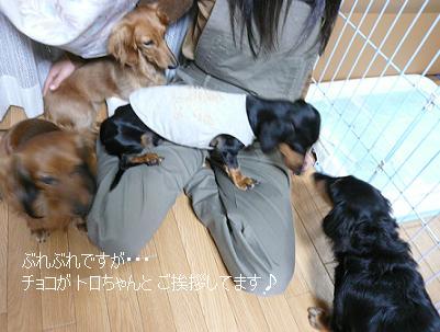 P1040033_aisatu