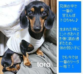 P1040038_toro1