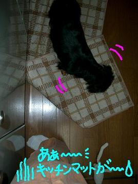Cimg1748_dai3_1