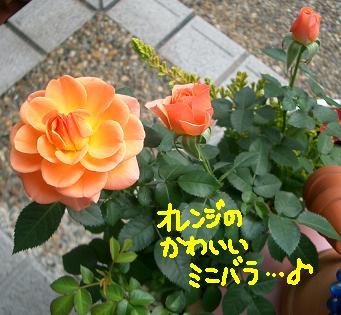 Cimg1758_orenge_1