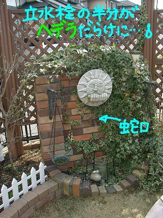 Cimg1780_hede1