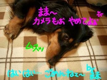 Cimg1902_kotatu4_1