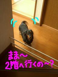 Cimg2006_2kai1