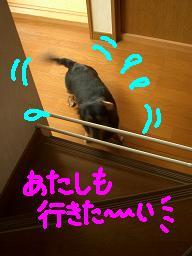 Cimg2008_2kai2