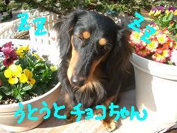 Cimg2046_u