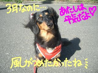 Cimg2503_san3