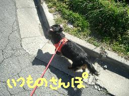 Cimg2505_san
