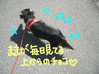 Cimg2506_san2_1