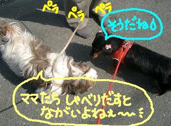 Cimg2715_hanasi