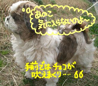 Cimg2989_komo