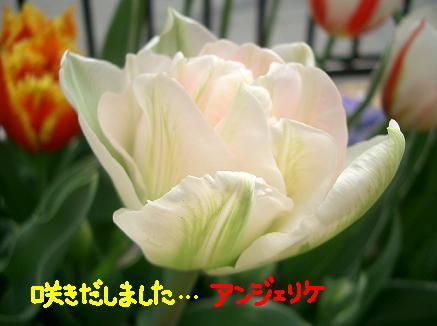 Cimg3546_anje