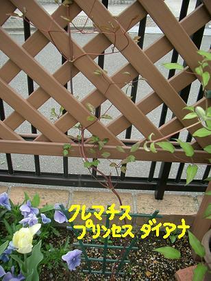 Cimg3680_daiana