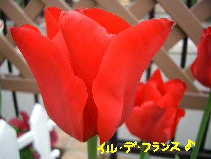 Cimg3695_iru