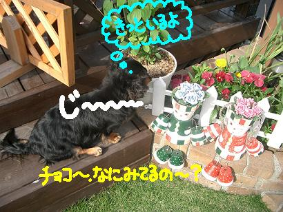 Cimg3924_b