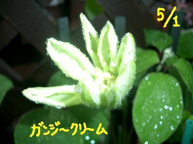Cimg3941_g2_3