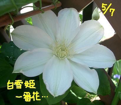 Cimg3991_sirayuki1