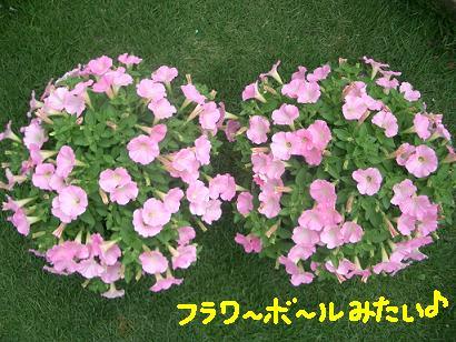 Cimg4105_hohoemi2