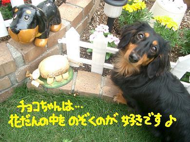 Cimg4112_choko2