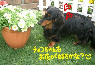 Cimg4114_choko1