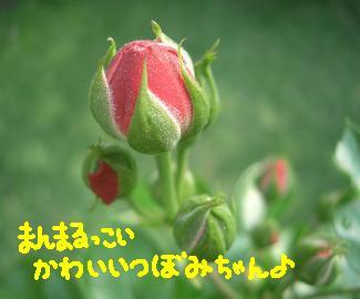 Cimg4117_poruka2