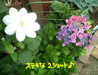 Cimg4183_2syoto