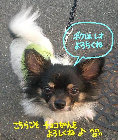 Cimg4326_reokun2_1