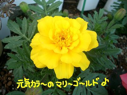 Cimg4486_mari