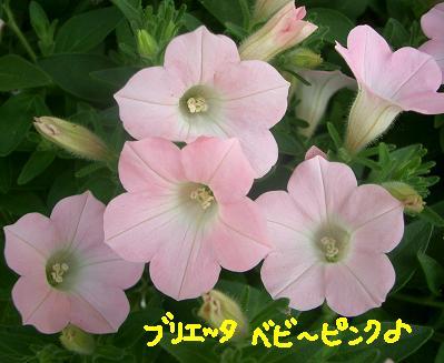 Cimg4536_beby