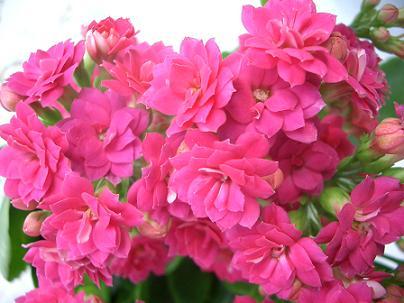 Cimg4598_pink2