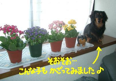 Cimg4626_tyoko1