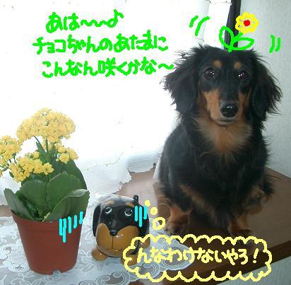 Cimg4628_tyoko3