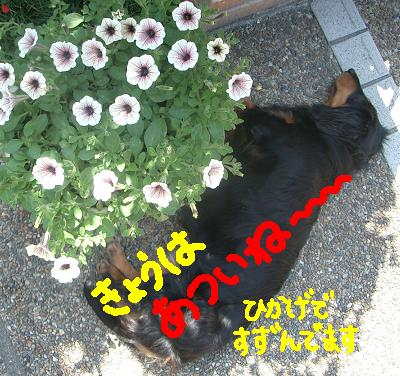 Cimg4686_suzumu
