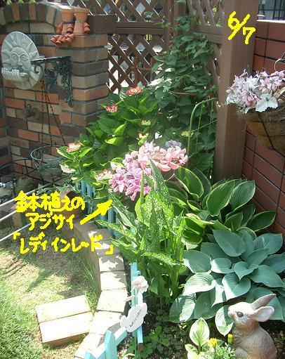Cimg4991_garden_1