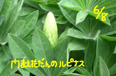 Cimg5033_monmae