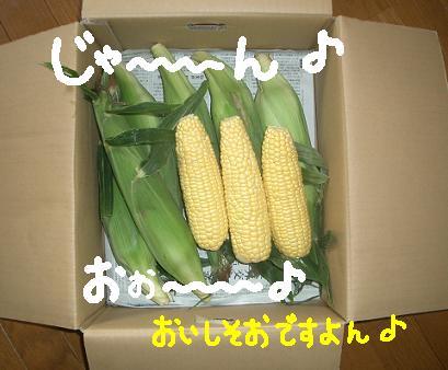 Cimg5073_1_1