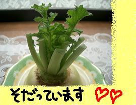 Cimg5202_2