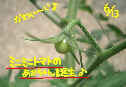 Cimg5204_t