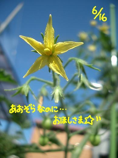 Cimg5358_k1_1
