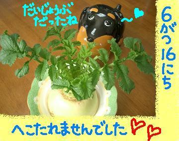Cimg5371_h