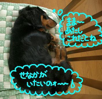 Cimg5604_senaka