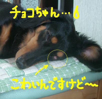 Cimg5608_kowaime